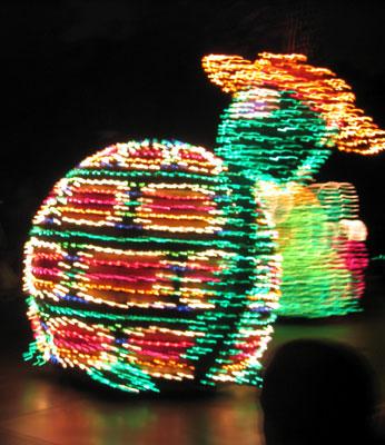 Turtle with Sombrero