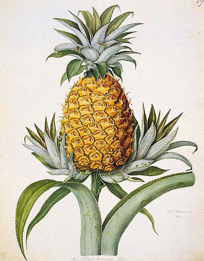 Black Jamaican Pineapple