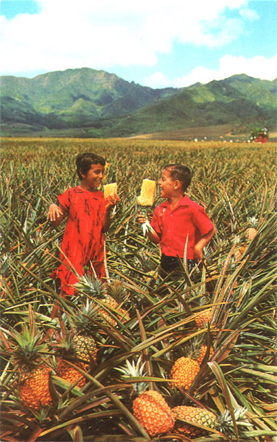 Field Ripe Pineapples