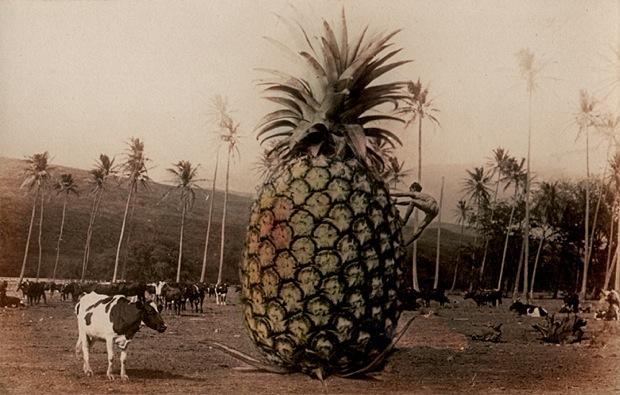 Man Climbing Pineapple