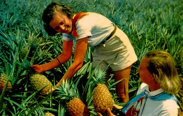 One of Hawaii's Big Crops