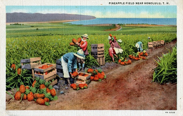 Pineapple Field Near Honolulu, T.H.