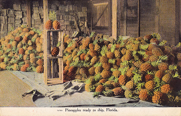 Pineapples Ready To Ship, Florida