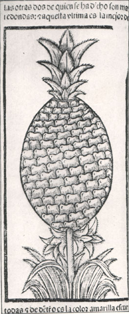 The First Pineapple Illustration