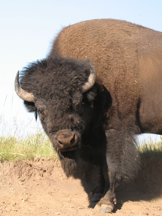 A Bisons-Eye View